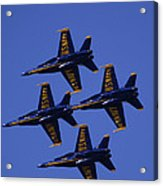 Blue Angels Acrylic Print by Bill Gallagher