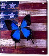 Blue Butterfly On American Flag Acrylic Print by Garry Gay