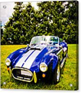 Blue Cobra Acrylic Print by Phil 'motography' Clark