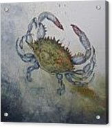 Blue Crab Print Acrylic Print by Nancy Gorr