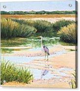 Blue Heron Acrylic Print by Karol Wyckoff