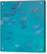 Blue Life Acrylic Print by Michael Glenn