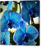 Blue Monday Acrylic Print by Mandy Shupp