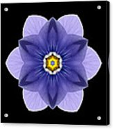 Blue Pansy I Flower Mandala Acrylic Print by David J Bookbinder