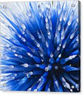 Blue Starburst Acrylic Print by Caroline Roberti