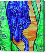 Blue Wolf Acrylic Print by Derrick Higgins