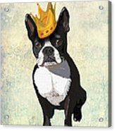 Boston Terrier With A Crown Acrylic Print by Kelly McLaughlan