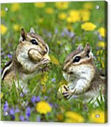 Bountiful Generosity Acrylic Print by Christina Rollo