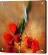 Bouquet Of Red Poppies And White Ribbon Acrylic Print by Jaroslaw Blaminsky