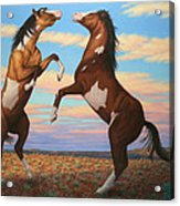 Boxing Horses Acrylic Print by James W Johnson