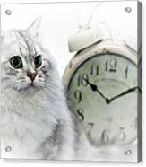 British Longhair Cat Time Goes By II Acrylic Print by Melanie Viola