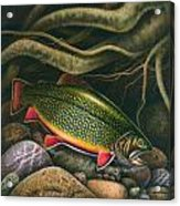 Brook Trout Lair Acrylic Print by JQ Licensing