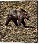 Brown Bears Acrylic Print by Angel Jesus De la Fuente