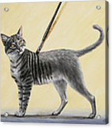 Brushing The Cat - No. 2 Acrylic Print by Crista Forest