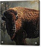 Buffalo Moon Acrylic Print by Karen Slagle