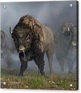 Buffalo Vanguard Acrylic Print by Daniel Eskridge