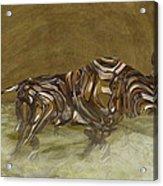 Bull Acrylic Print by Jack Zulli