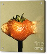 Bullet Piercing A Strawberry Acrylic Print by Gary S. Settles