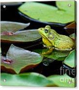 Bullfrog Acrylic Print by Jim Zipp