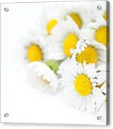 Bunch Of Daisies Acrylic Print by Anne Gilbert