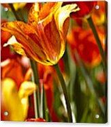 Tulips-flowers-tulips Burning Acrylic Print by Matthew Miller