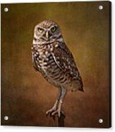 Burrowing Owl Portrait Acrylic Print by Kim Hojnacki