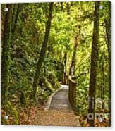 Bush Pathway Waikato New Zealand Acrylic Print by Colin and Linda McKie