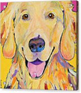 Buster Acrylic Print by Pat Saunders-White