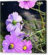 Busy Bees Acrylic Print by Susan Leggett