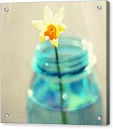 Buttercup Photography - Flower In A Mason Jar - Daffodil Photography - Aqua Blue Yellow Wall Art  Acrylic Print by Amy Tyler