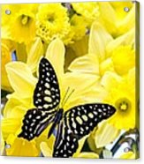 Butterfly Among The Daffodils Acrylic Print by Edward Fielding