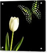 Butterfly And Tulip Acrylic Print by Edward Fielding