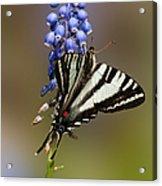 Butterfly Delight Acrylic Print by Lara Ellis
