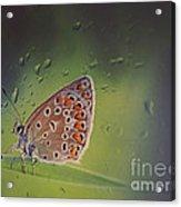 Butterfly Acrylic Print by Diana Kraleva