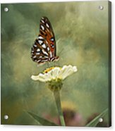 Butterfly Dreams Acrylic Print by Kim Hojnacki
