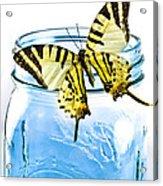 Butterfly On A Blue Jar Acrylic Print by Bob Orsillo