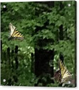 Butterfly Waltz Acrylic Print by Debra     Vatalaro