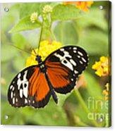 Butterfly Wings Acrylic Print by Anne Gilbert