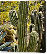 Cacti Habitat Acrylic Print by Kelley King