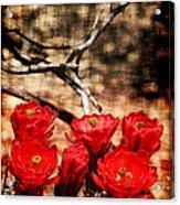 Cactus Flowers 2 Acrylic Print by Julie Lueders