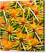 Cactus Pattern 2 Yellow Acrylic Print by Amy Vangsgard