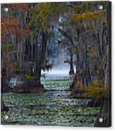 Caddo Lake Morning Acrylic Print by Snow White