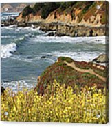 California Coast Overlook Acrylic Print by Carol Groenen