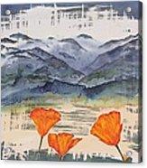 California Poppies Acrylic Print by Carolyn Doe