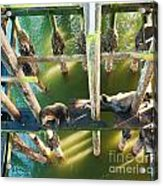 California Sealions Under The Santa Cruz Pier Acrylic Print by Artist and Photographer Laura Wrede