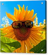 California Sunflower Acrylic Print by Bill Gallagher