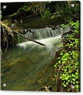 Calm Rapids Acrylic Print by Jeff Swan