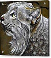 Canadian Lynx Acrylic Print by Jurek Zamoyski