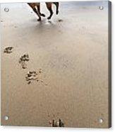 Canine Beach Jogging Acrylic Print by Eldad Carin