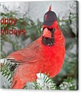 Capped The Cardinals Acrylic Print by Dale J Martin